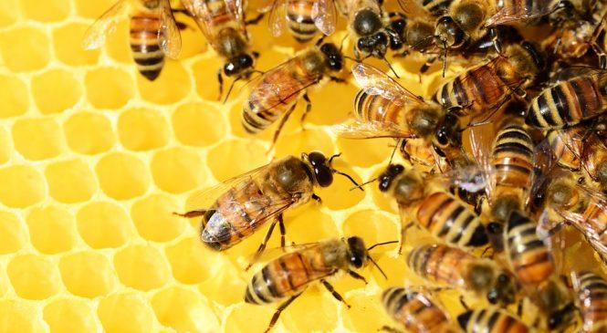 Защо има разлика в цената на меда предлагана от магазините и тази от производителите на пчелния продукт